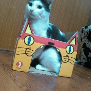 去勢済みのオス猫