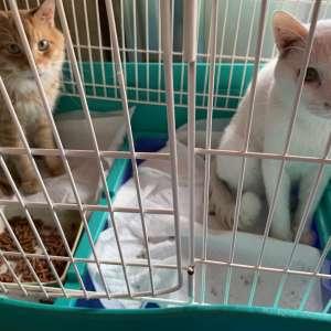 親の飼っていた猫の里親募集