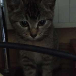 野良猫の子猫です