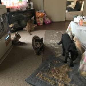 20匹のネコがいます。