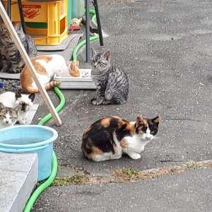可愛い野良猫ちゃんをもらってください